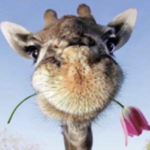 Profile photo of Jasmine Flower